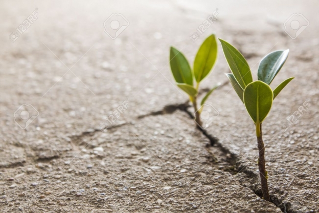 18648101-weed-growing-through-crack-in-pavement-Stock-Photo-hope-strength-growing